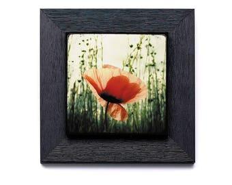 Eclosion de Coquelicot - sur petit cadre 22x22cm avec collage photo