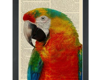 Rainbow Parrot Dictionary Art Print