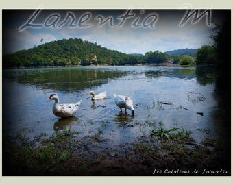 Photo 30X40cm 3 ducks on Lake in the Var Carcès