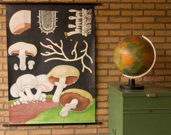 Vintage Pull down School Chart Mushroom  Jung Koch Quentell
