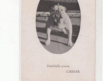 Caesar The Bulldog Advertises The Brookfield Ma Inn,  He's Here To Greet You,Unused C 1910 Postcard