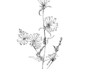 Flower artwork etsy chicory sketch wild flower artwork gift line drawing botanical art prints floral poster black white printable wall decor mightylinksfo