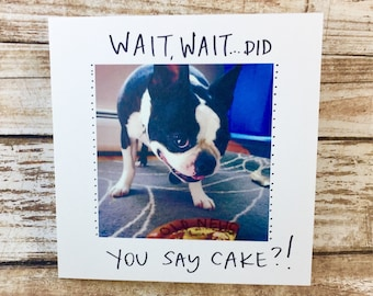 Did somebody say cake? birthday card funny, birthday card unique, boston terrier happy bday, birthday, boston terrier funny birthday card