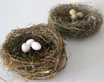 Speckled Birds Eggs
