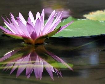 Flore de Bali - réflexion (lilas nénuphar miroir reflet photo print, exotique Bali voyage photographie, violet lotus vert paisible zen)