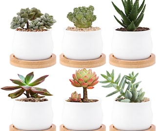 Ceramic Small Plant Pot with Bamboo Bottom