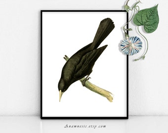 BLACK BIRD - digital download - printable antique bird illustration retooled by Anamnesis - image transfer - totes, pillows, prints, clothes