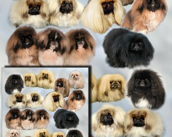 Pekingese (Peke) Dog Gift Wrapping Paper with matching Gift Card