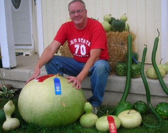 BUSHEL BASKET GOURD / Averages 30 - 100 Pounds / Great 4 Crafts / Used to Haul Water / Great Fall Decoration / Heavy Producer / Easy 2 Grow