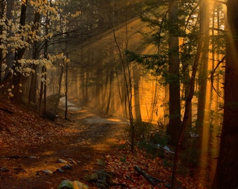 Morning comes to Vaughan Woods