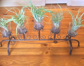Metal and glass candleholder with Air plants