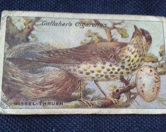 Gallaher Cigarettes Picture Card Birds Nests And Eggs Series No32 Missel Thrush