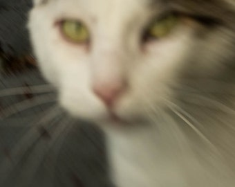 Blurred photography  foggy art  Working Whiskers  //  instant download / jpg file / home decor / wall art / cat