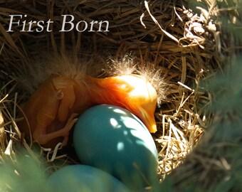 First Born, 3Butterflies Photography