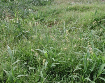 Organic Weed Killer, Fertilizer and Insecticide Recipes