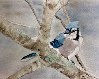 Winter Blue Jay Watercolor Print, Bird Art, Wildlife Art, Nature Print