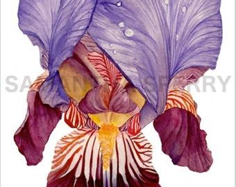 PRINT Watercolor Iris | Limited Edition | Bearded Iris | Flower Art | Botanical print | Valentine's Mother's Day Wedding gift | Home decor