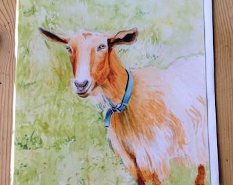 Rosie Goat