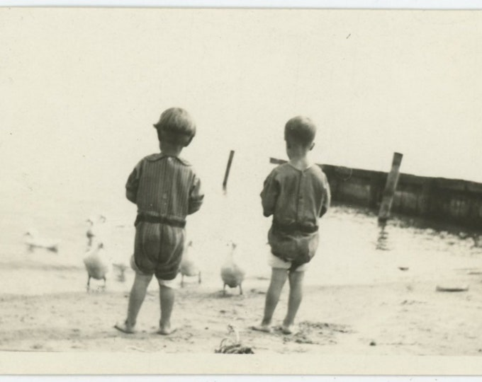 Vintage Snapshot Photo: Feeding Ducks [84662]