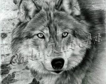 Wolf Art Print Watchful Eyes by Carla Kurt Signed wwao ebsq drawing painting
