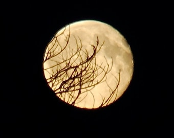 October Full Moon photograph, black & gold moonphase art, moon behind tree branches, black night sky, nature photo, tree silhouette