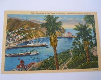 Santa Catalina Island Postcard