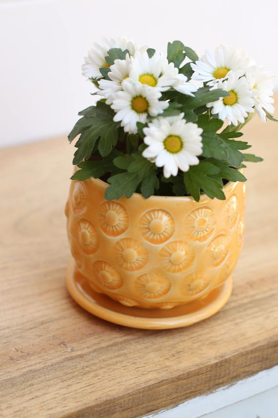 orange flower pot // cactus planter // succulent pot // ceramic pot // flower pot