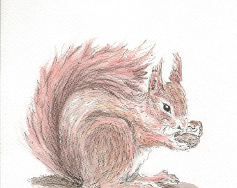 Red Squirrel limited edition Digital Print - from original sketch