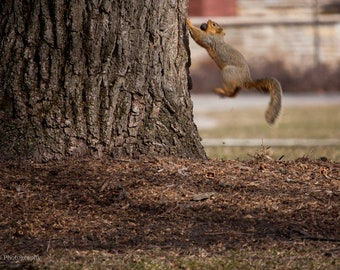 Squirrel in Action --Photography-- 8x12