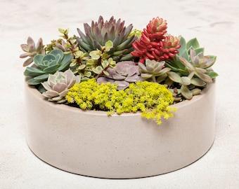 Concrete Planter, Concrete Bowl, Round Concrete Bowl, Succulent Planter, Cement Bowl, Succulent Container, Conrete Fruit Bowl