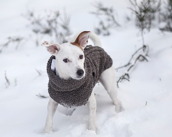 Small dog sweater // ready to ship // female Russell terrier dog coat // hand-knit 100% sheep wool dog sweater //