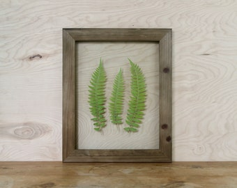 Pressed Plant Art, Rustic Cabin Decor, Forest Wall Art, Framed Ferns, Northwest Decor, Nature Lover Gift, Unique Wedding Gift, Herbarium