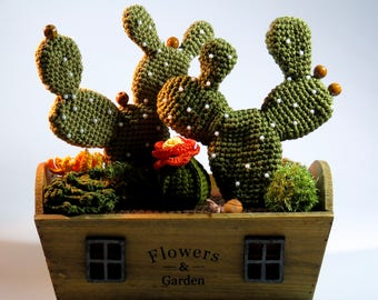 Cacti and succulent arrangement in a wooden box