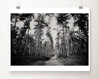 black and white photography woodland photograph tree photograph nature photography tree leaves autumn photograph forest road