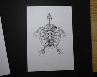 Sea Turtle Anatomy Ink Drawing
