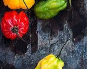 Tri-Color Habanero Seeds, FREE Shipping, 30 seeds, Rabbit Rescue Donation