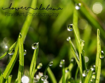Morning Dew- Fine Art Photography