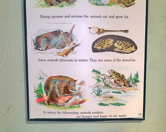 "1963 Elementary School Science Chart -  Large 18X24 - With Illustrations of Wildlife ""Fun Retro Art"""