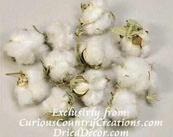 Cotton Bolls | Cotton Balls | Dried Cotton | Natural Cotton | Dried Decor