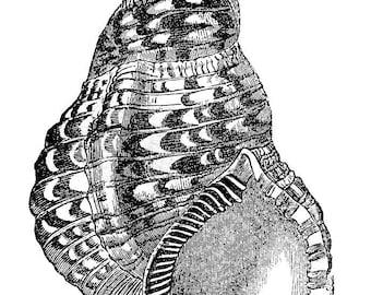 Shell - temporary tattoo