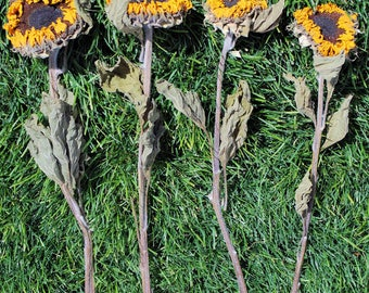 Dried Sunflowers | Sunflower Stems | 5 Stems Sunflowers | Yellow Flowers