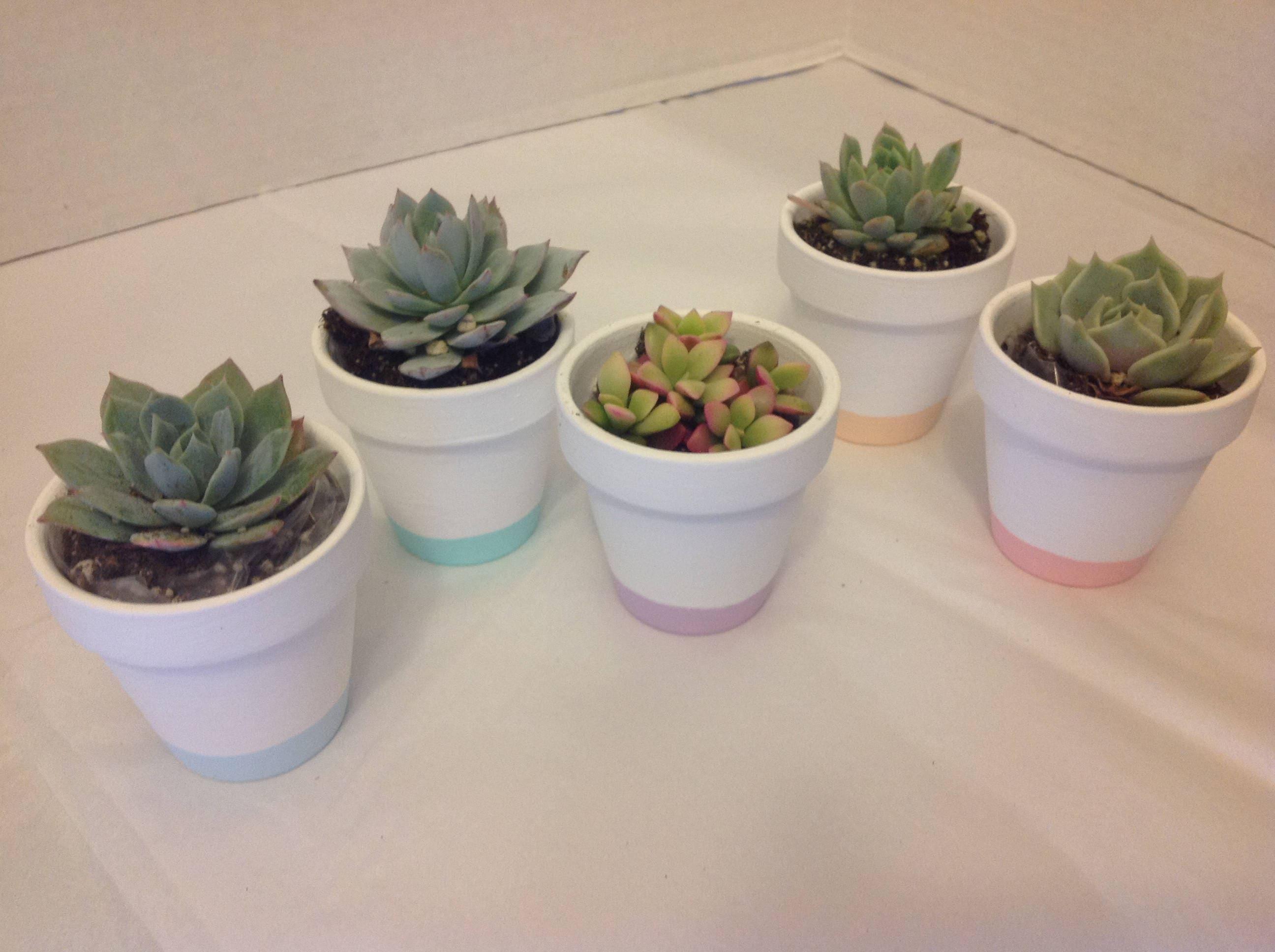 Succulent plant wedding favors. Beautiful terra cotta pot. DIY 25 ...