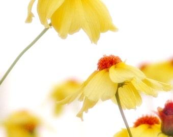 Yellow Flower Photo Sunshine Floral Bright Cheery Orange Dreamy Wall Decor