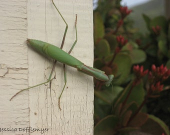 """Photography Note Card Handmade on Recycled Paper, Blank Inside, with Envelope- """"Mantis"""""""