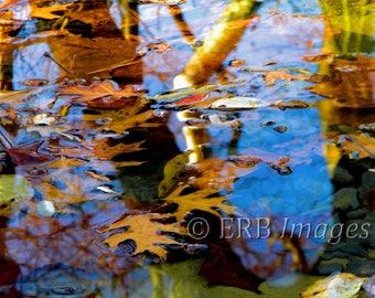 Fall Abstract -  Fine Art Photograph - Home Decor