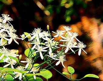 Waterslide decal - white flowers