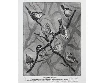 Birds etching-Bird Print- Bird Art -Drawing of birds -Garden Birds-British Birds.