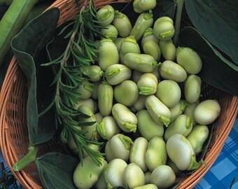 Broad Bean Witkiem Manita - 60 seeds Vegetable