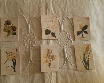 Set of 6 stickers for scrapbooking / botanist flowers / embellishments / floral stickers