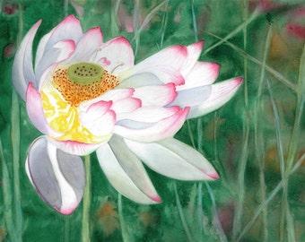Lotus, Close Focus